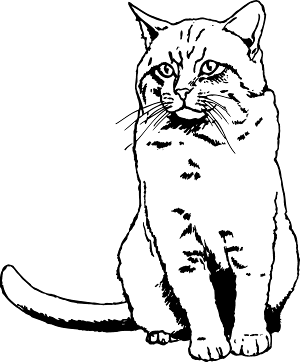 Comfortable Cat Decal
