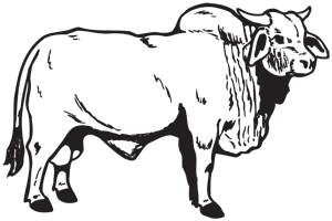 Brahma Bull Decal Decal City The Ultimate Decal Maker Shop