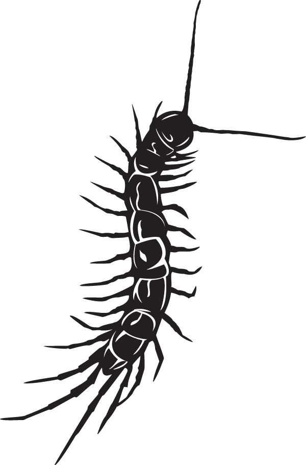 Centipede Sticker