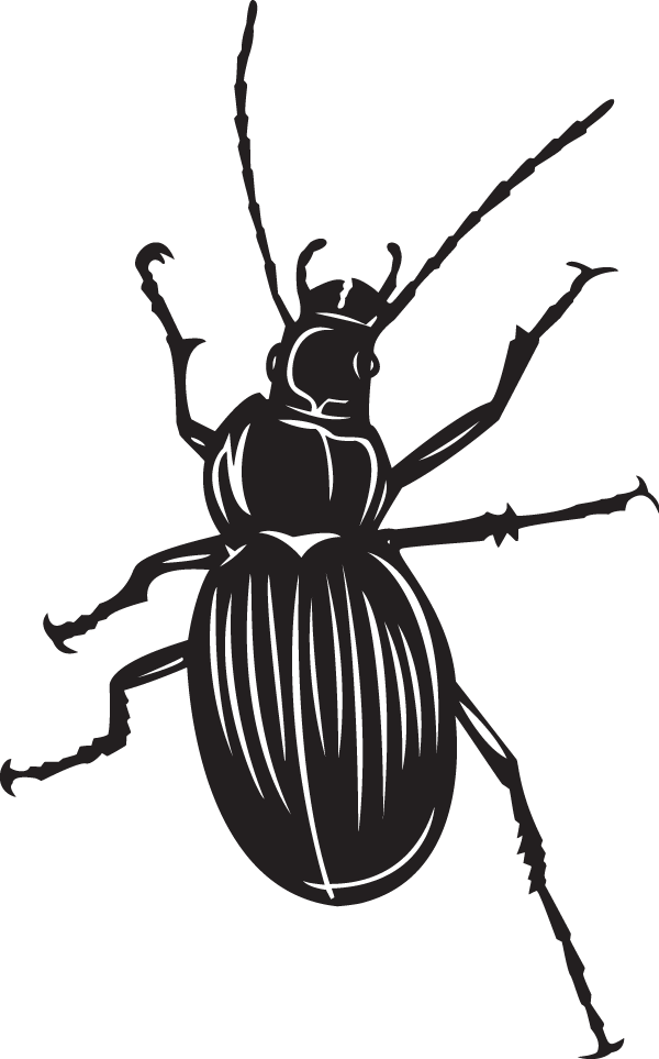 Beetle sticker
