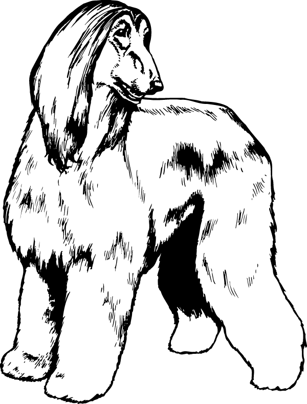 Afghan Hound with Head Turned Decal