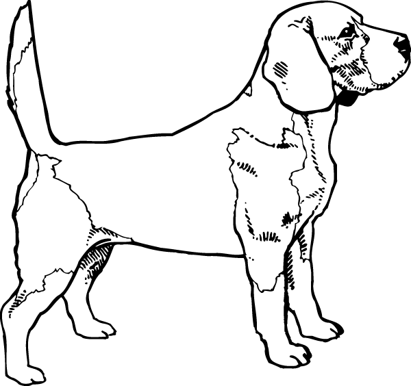 Beagle Outline Decal