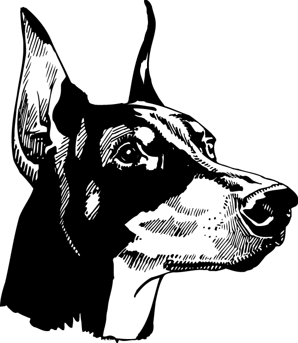 Doberman Head Decal
