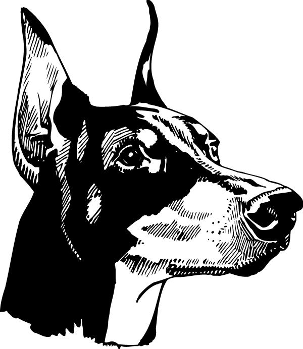 Doberman Head Decal