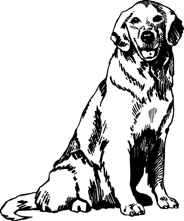 Nice Labrador Decal