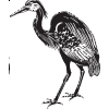 Custom sized: Great Blue Heron Decal