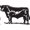 Black Angus Decal